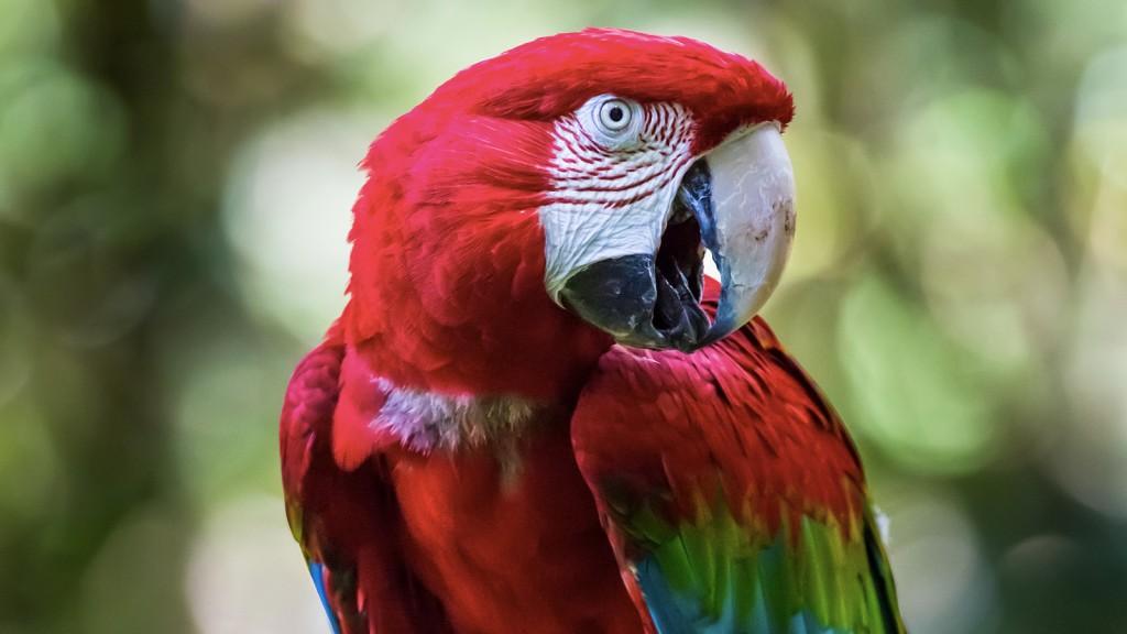 Journey To The Amazon With Brazilian Birds Radio Brazigzag