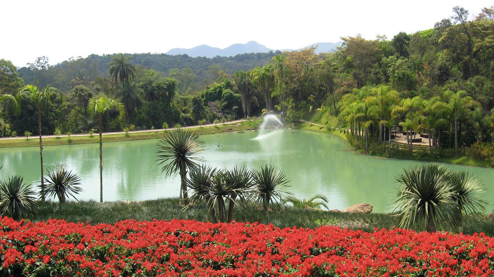 instituto-inhotim-jardim-botanico-botanical-gardens