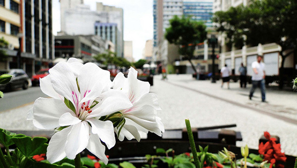 curitiba-brazil-sustainable-city-flower